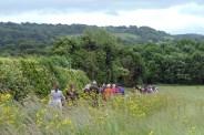 Idyllic Fields