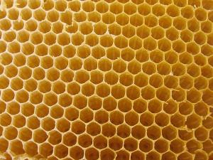 bee1.house.yellow.bg
